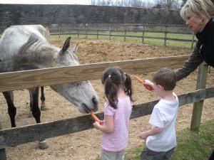 Feeding Bling a carrot